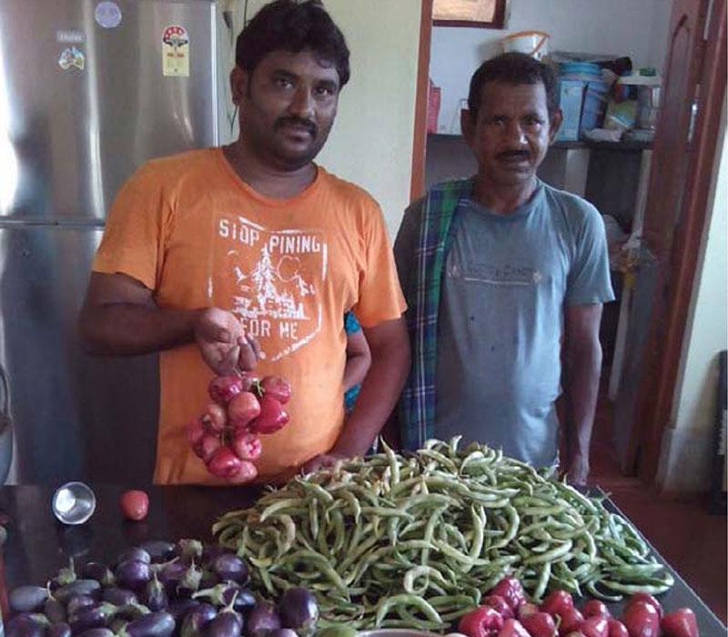 icha organic farming